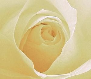 Besonders schön ist die Rosenblüte im Frühsommer.