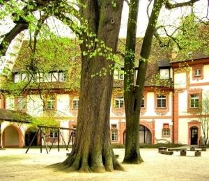 Kernburg, mächtige Gerichtslinde, ca. 450 Jahre alt.