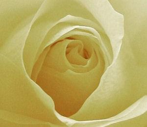 Genießen Sie Romantik mit allen Sinnen...