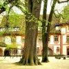 Kernburg, mächtige Gerichtslinde, ca. 500 Jahre alt.
